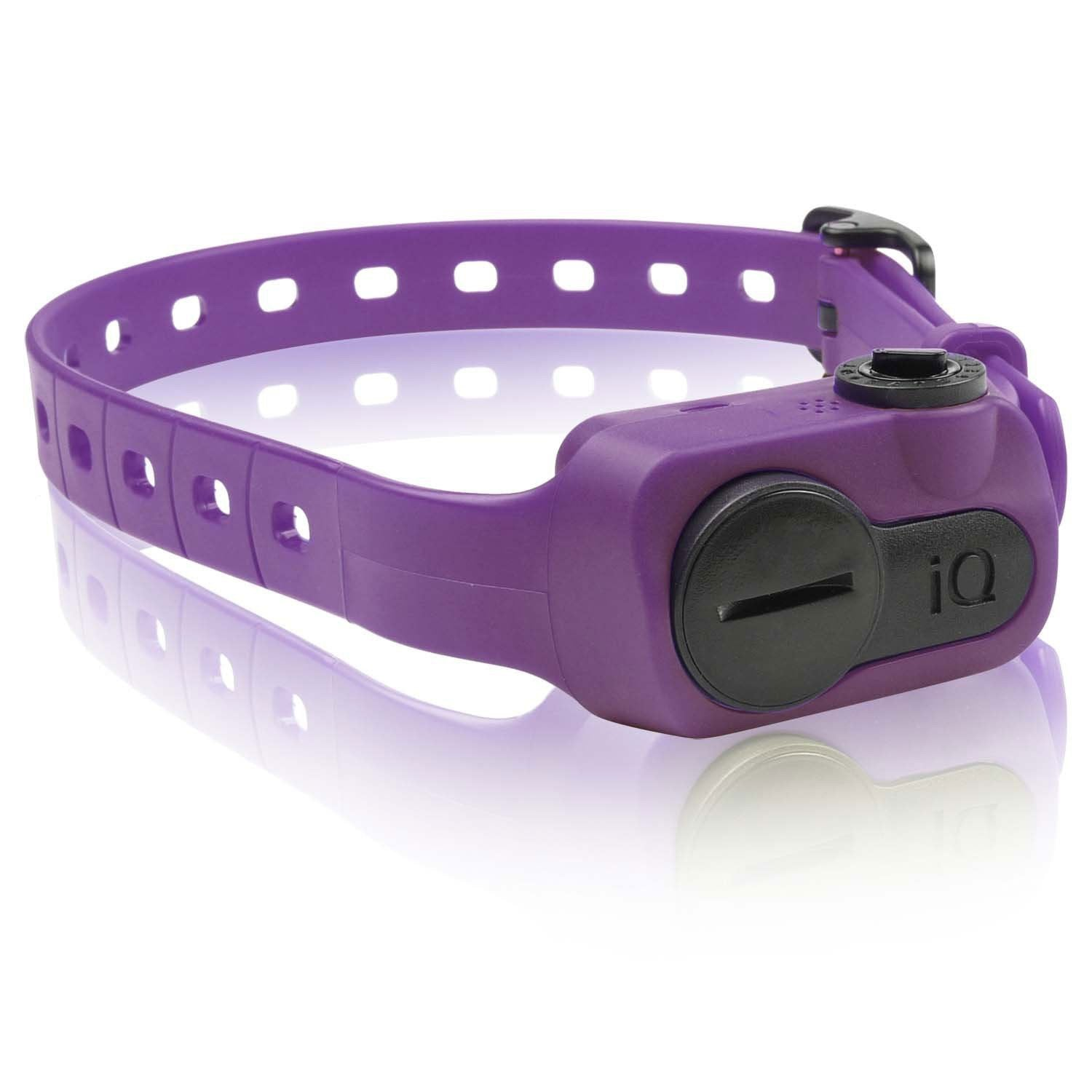 Dogtra IQ-BARK-PUR iQ No Bark Collar Purple from Dogtra