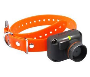 Dogtra Receiver 2500T&B (Orange) from Dogtra