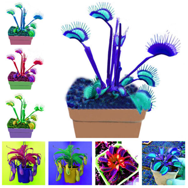Egrow 100 Pcs/Pack Flycatcher Seeds Giant Clip Venus Flytrap Potted Bonsai from Egrow