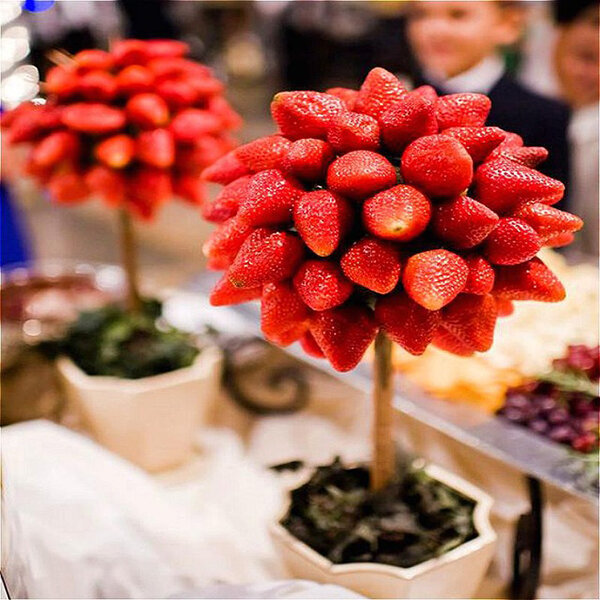 Egrow 100 Pcs/Pack Strawberry Tree Seeds Rare Fruit Strawberry Bonsai Seed Garden DIY Planting from Egrow