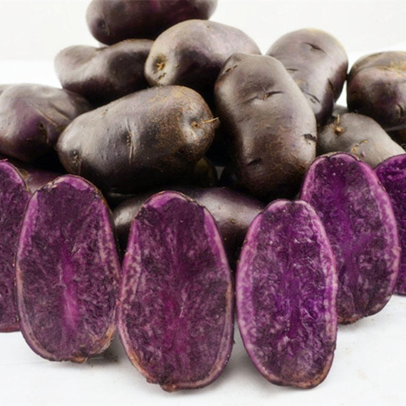 Egrow 100Pcs/Pack Purple Sweet Potato Seeds Nutrition Green Vegetable Bonsai Farm Plants from Egrow