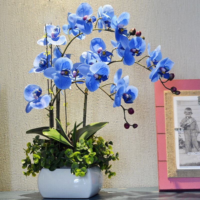 Egrow 200 PCS/Pack Rare Bonsai Flower Blue Butterfly Orchid Plant Garden Phalaenopsis Orchids Seeds from Egrow