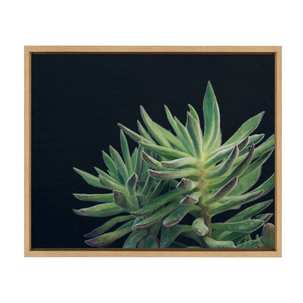 "18"" x 24"" Sylvie Succulent 13 Framed Canvas by F2 Images Natural - Kate and Laurel from Kate & Laurel All Things Decor"
