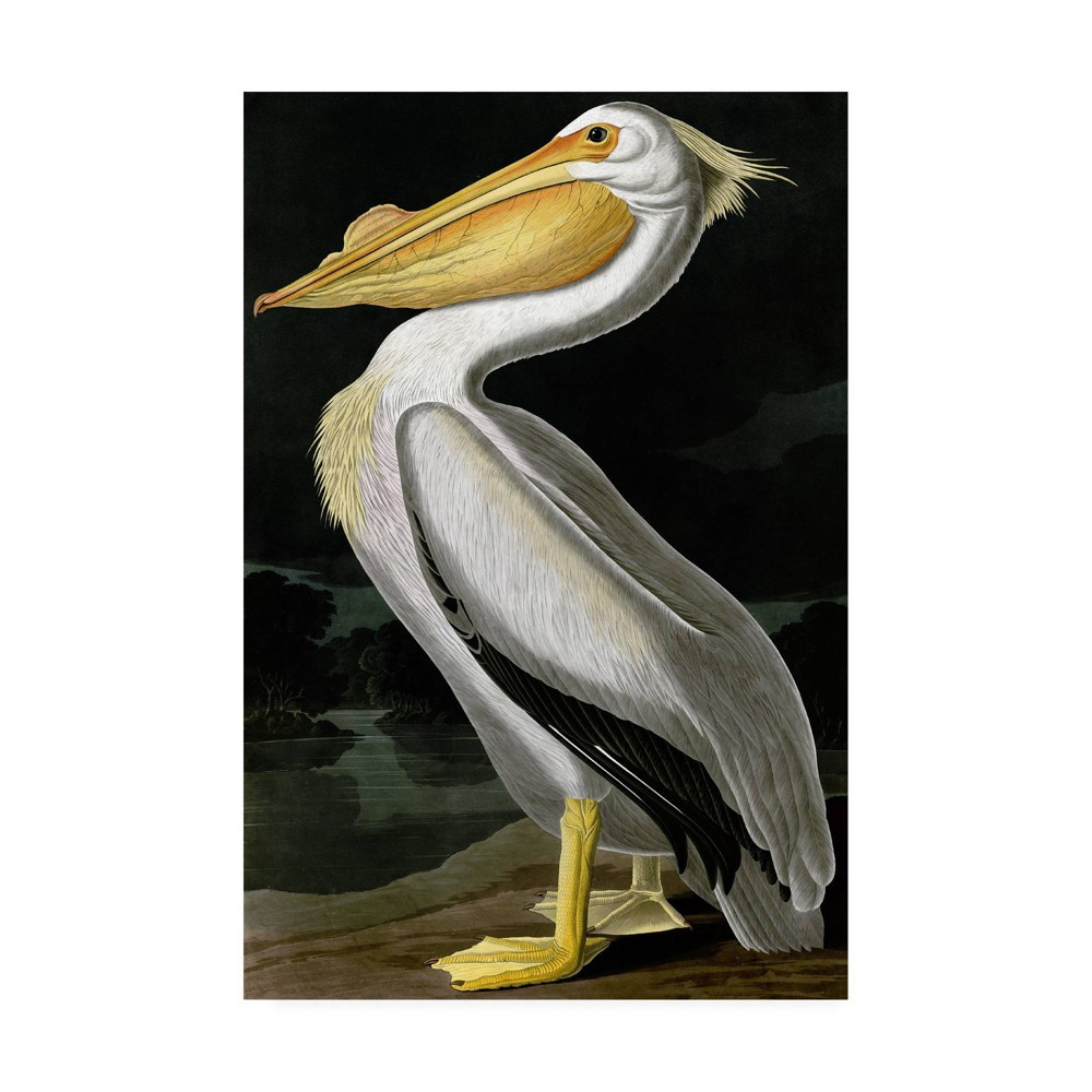 "30"" x 47"" American White Pelican by John James Audubon - Trademark Fine Art from Trademark Global"