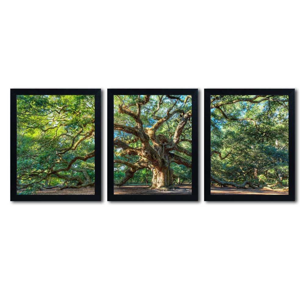3pc Angel Oak Charleston by Pierre Leclerc - Trademark Fine Art from Trademark Global