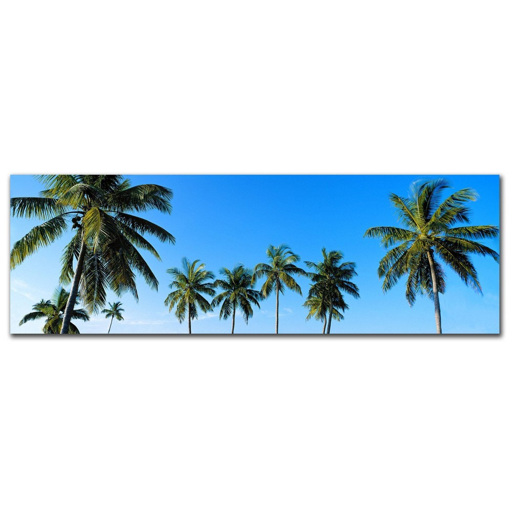 "8x"" 2 4"" Palms by Preston - Trademark Fine Art from Trademark Global"