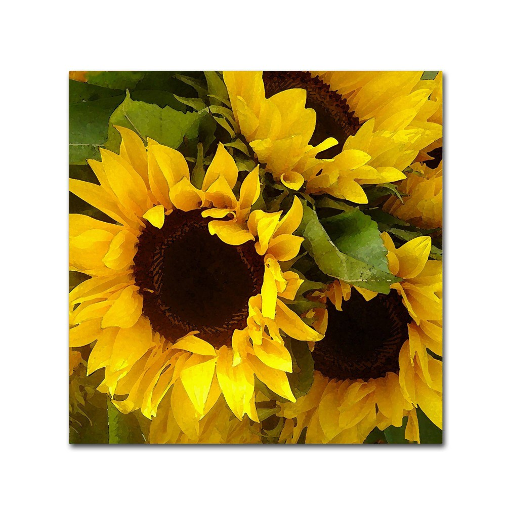 "24"" x 24"" Sunflowers by Amy Vangsgard - Trademark Fine Art from Trademark Global"
